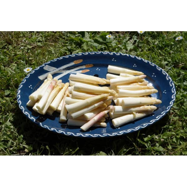 plat asperges en terre cuite bleu poterie friedmann terre naturelle de soufflenheim